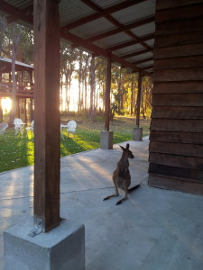 Meet Rosie the kangaroo, if she is passing by!