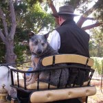Riding on the Horse Carriage