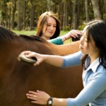 Grooming Lessons at Saddle Club