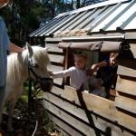 Ponies, Children, Cubby house