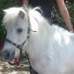 Jaspar the Pony