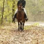 Country Lane Trail Ride