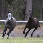 Horse Fun Time
