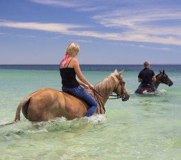 horses swimming at the beach